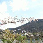 【動画有り】宮城県のおすすめ観光スポット!自然が美しい七ヶ宿ダム!道の駅!鯉のぼり