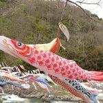 【動画360度撮影有】GWにおすすめ!宮城県観光名所♪材木岩公園の800匹の鯉のぼり!