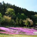 【動画あり】宮城県観光名所スパッシュランドしろいしの芝桜を見に行こう!新鮮野菜の天ぷらもおススメ